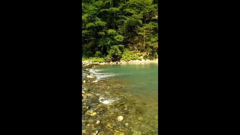 Красивый уголок Тиссо-самшитовая роща. Как хочется вернуться сюда😉