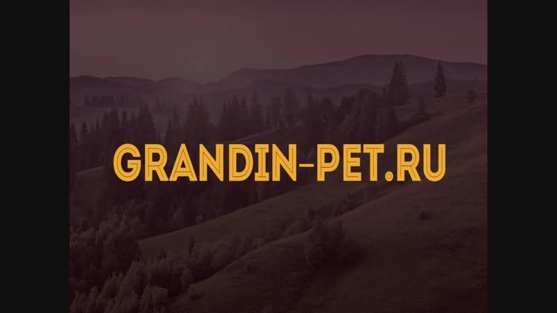Рекламный ролик для GRANDIN