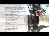 Собака по кличке Соня нуждается в семье