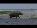 С водой и без воды Лоанго жемчужина Африки
