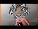 Drawing a Sumatran Tiger Kirana Timelapse Artology