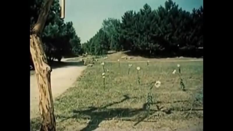 Да здравствует сюрприз Незнайка с нашего двора Полный фильм