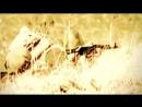 Опять Тревога. Песни Афганской войны._TubeID.Co.mp4