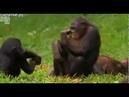 Женская логика на примере обезьян