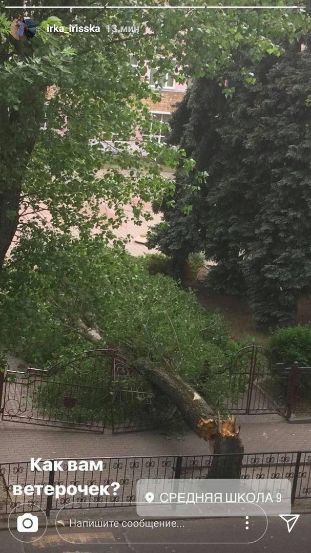 В Бресте сильный ветер, в парке рухнуло дерево, пострадала девочка