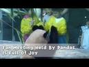 Fan Meeting Held By Pandas Is Full Of Joy iPanda