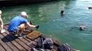 Акция Чистый берег. Чистое море на Графской пристани, 4 июня 2016 года