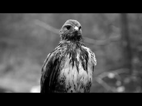 SolO - Воспоминание [Noize MC - Жвачка Cover]