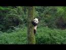 Введение в pandas визуализацию с matplotlib