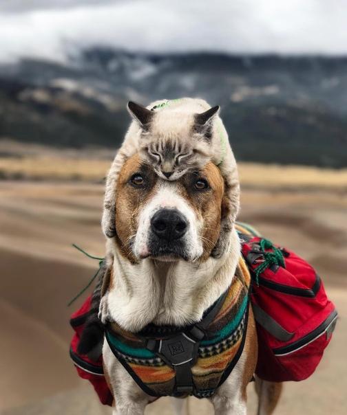 Генри и Балу: неразлучные пес и кот, которые вместе со своими хозяевами путешествуют по Америке и не представляют жизни друг без друга. Пара из США, Синтия и Андрэ, решили разбавить свою жизнь в