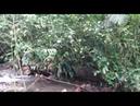 Ramon trejos Explorador Unas de las Bellesas de mi pais es su Bosque y Riachuelos 99 9 100 PURO