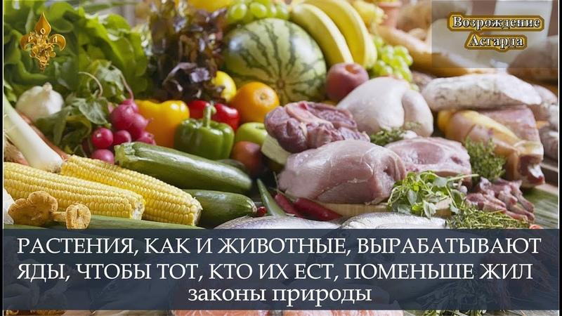 Растения как и животные вырабатывают яды чтобы тот кто их ест поменьше жил