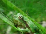 al green - lead me on
