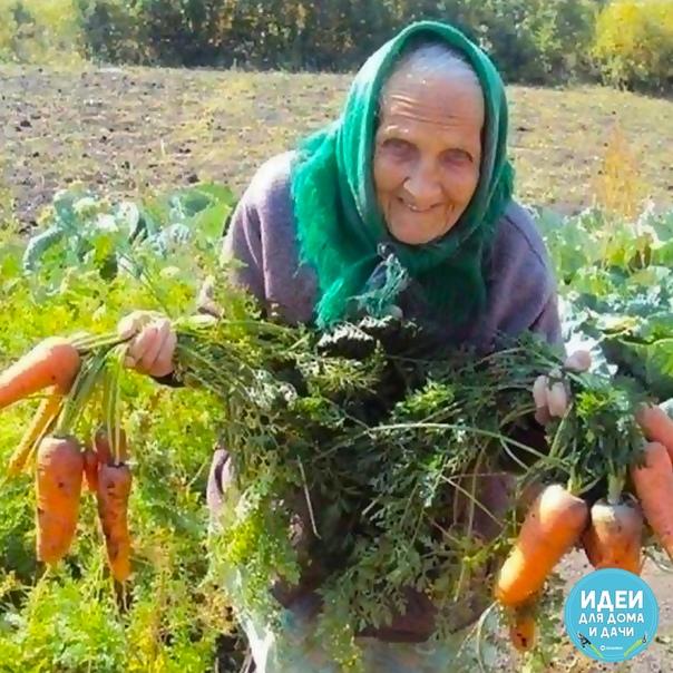 ☝бабушке 94 года, а за своим огородом ухаживает сама. оценим❤