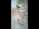 Пёс Дино 099