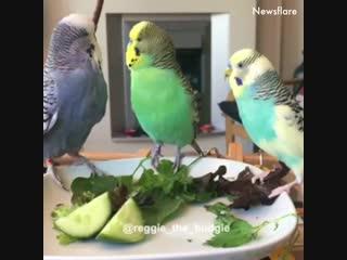 Дружба и любовь у животных!