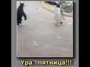 Ура Пятница Пингвин