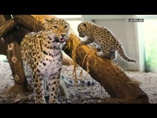 Весеннее пополнение в зоопарках