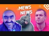 Mews News: Кот запугал медведя