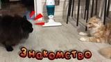 Участок / Знакомство котов / Песок для вольеров
