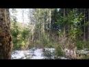 Кусочек оттаявшего весеннего леса