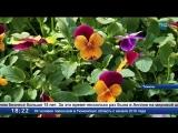 Цветы для Тюмени
