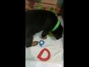 Джесика и новая игрушка