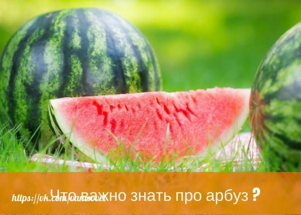 Что важно знать про арбуз