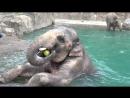 Слоны и вода или 2,5 минуты радости