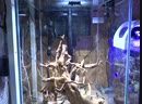 Аквариум Aquael Shrimp Set DUO LED 49 л
