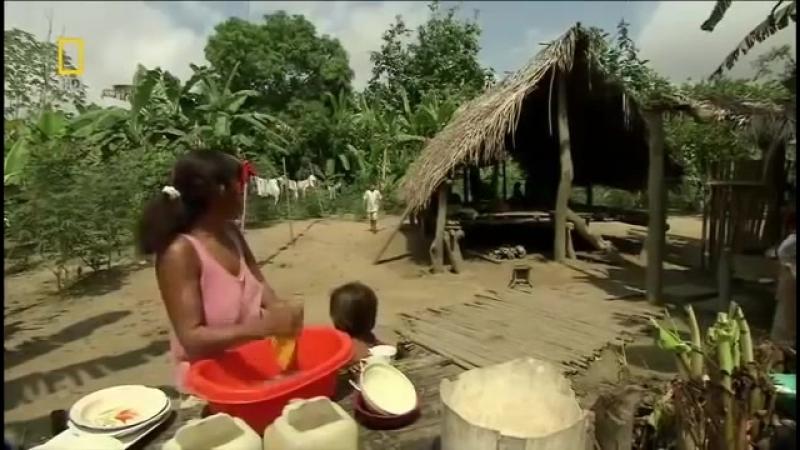 Мир животных. Дикая природа Амазонки. Документальный фильм
