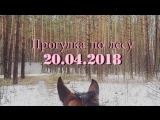 Прогулка по лесу, 20 апреля