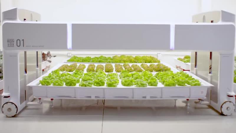 Гидропонная ферма с роботами вместо людей вырастит в 30 раз больше урожая