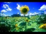 Summer Joe hisaishi