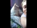 Кошка ушла 😂