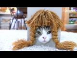 Самый популярный кот