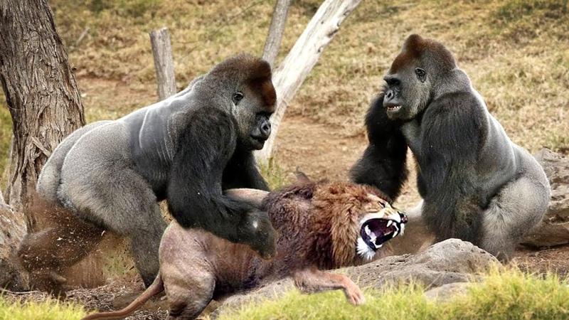 LIVE Wild Discovery Animals Most Amazing Moments Of Wild Animal Fights Animals Documentary 2018