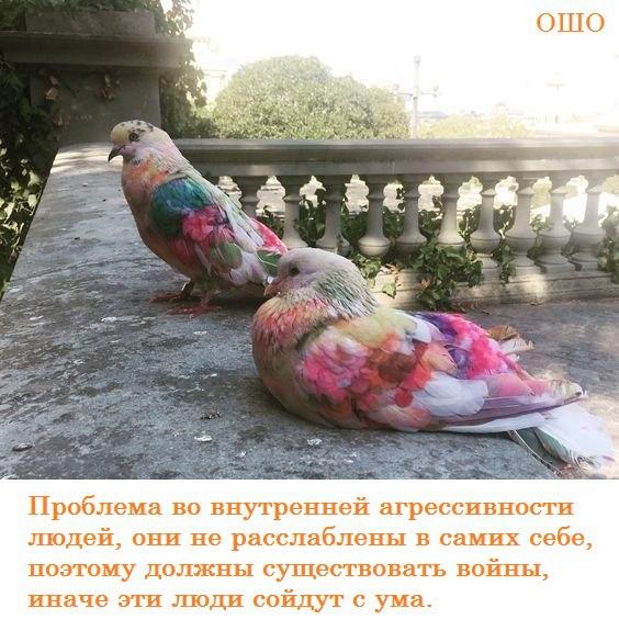https://pp.userapi.com/c845217/v845217822/492f0/ZyrotNP7hss.jpg