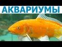 Магазин АКВАРИУМ (г. Тверь, Тверской пр-т, 5) - аквариумы, рыбки, корма