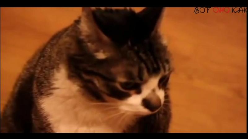 Кот говорит Мама