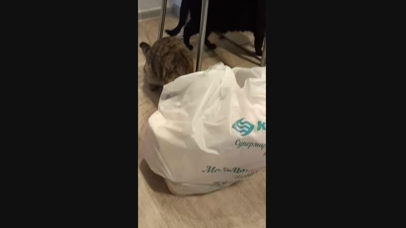 кошка решила что всё заберёт себе😂😂😂😂🤣🤣🤣😆😆😀😹😹