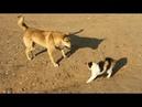 Những thước phim kung fu kinh điển của động vật : Chó , mèo , Khỉ !