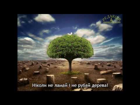 Бережи ліс – легені Землі!