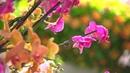Тысячи орхидей из Колумбии украсили лондонские Сады Кью