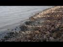 Вид на залив и набережная Петергофа