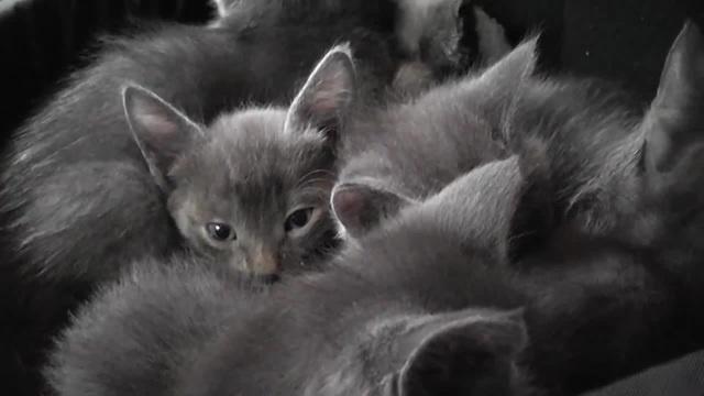 Cat Revving