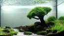 Кристально чистая вода в аквариуме, секреты аквариумиста