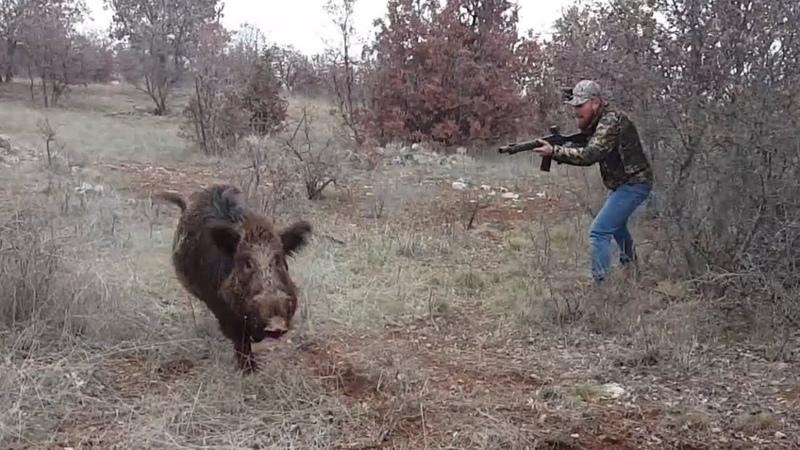 2017-18 Av sezonunda Barak Br99s ile çektiğim domuz avı videoları.Great Wild Boar hunts!!