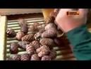 Телеканал НТВ в гостях на производстве Звенящие Кедры