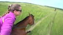 Horses spb video